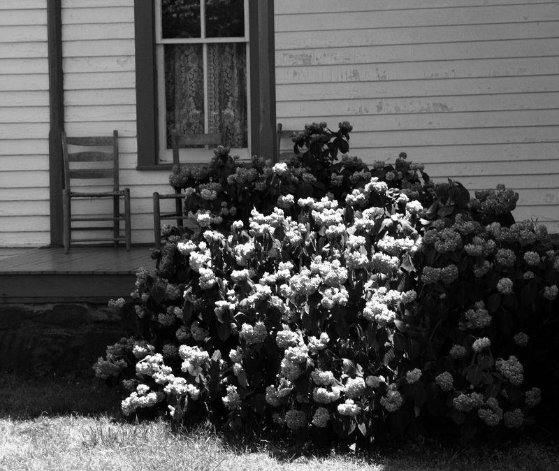 Conser House flowers bw