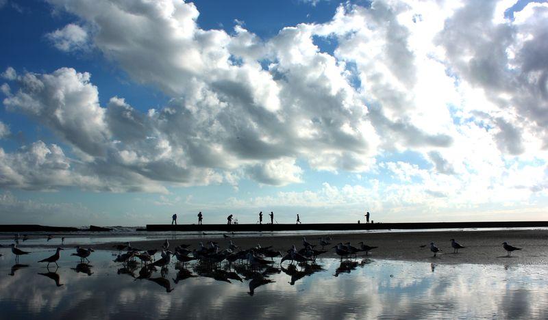 Fishermen and Birds Galveston