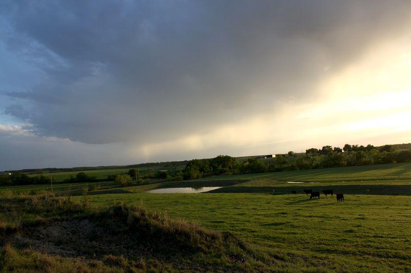 Green_pastures