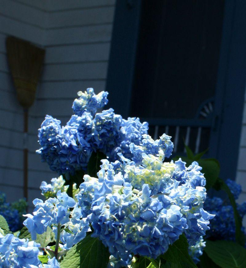 Conser HOuse Flowers