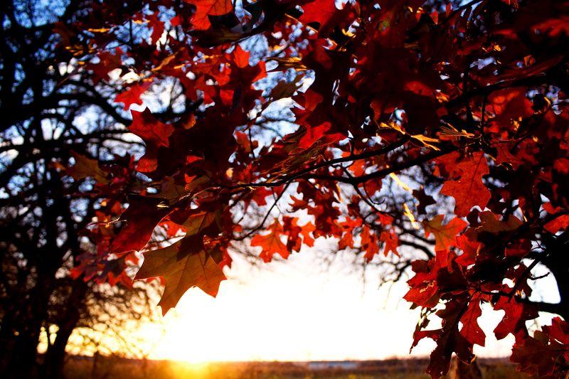Autumn Leaves TG 10