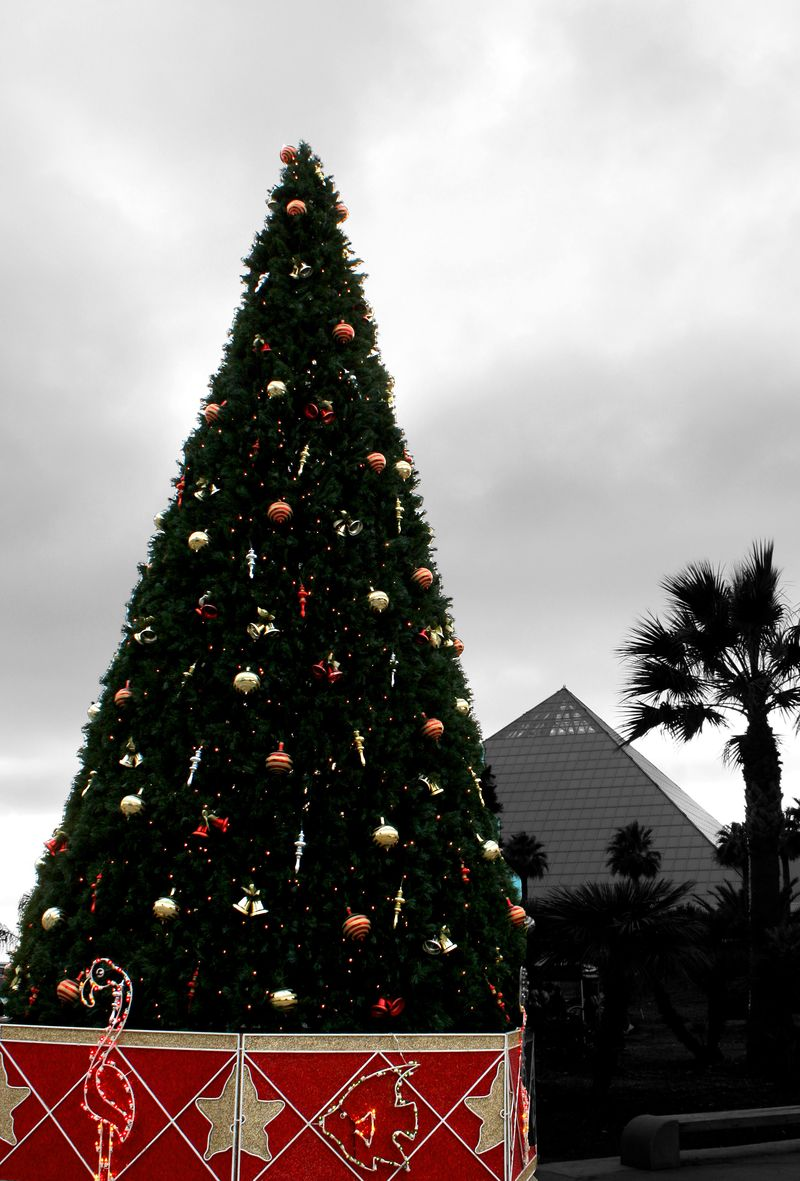 Moody Gardens Christmas Tree