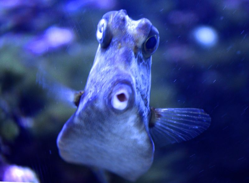 Fishy Kissy