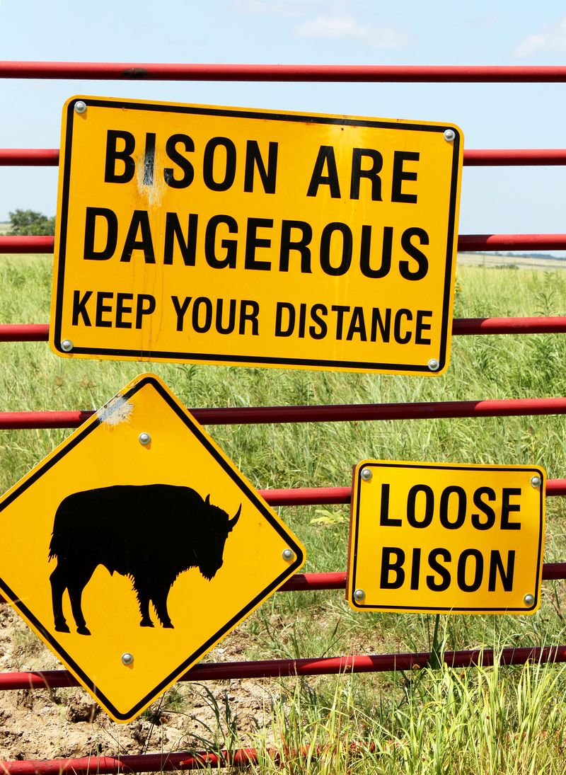 Bison Are Dangerous