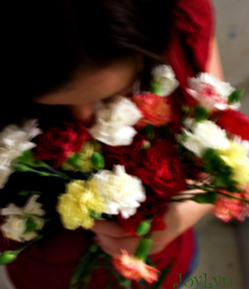 Blurred Carnations