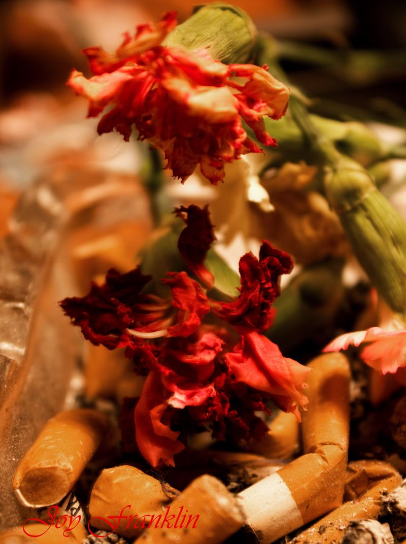 Flowers and Cigarette Butts