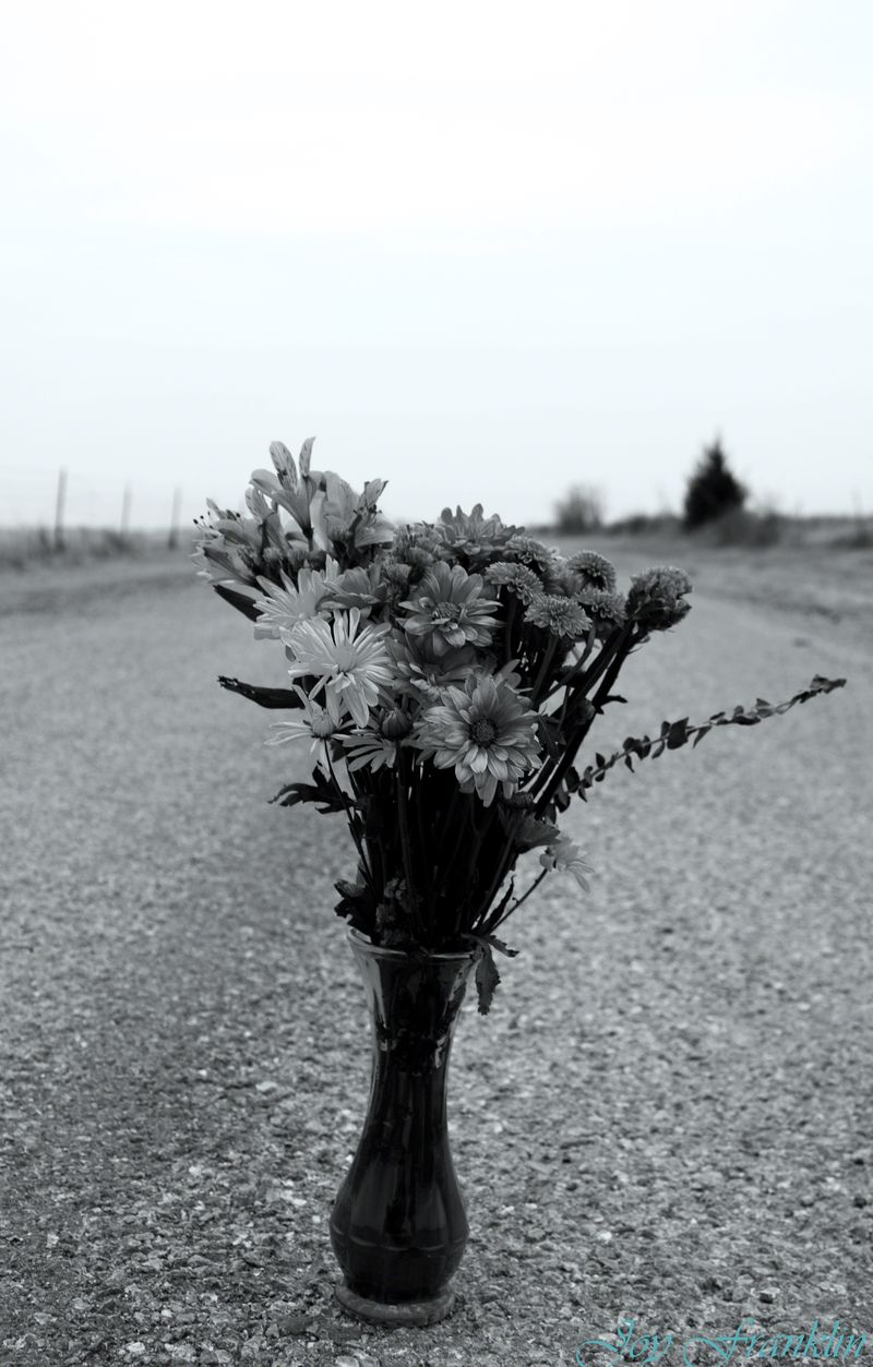 Flowers in the Road
