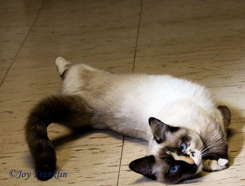 Weazy Cat