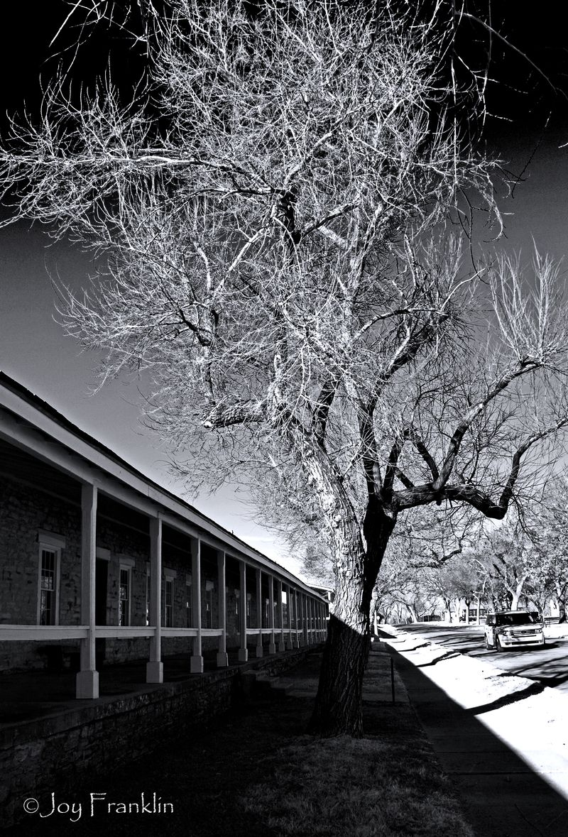 Cavalry Quarters and Tree at Ft Sill Abstract