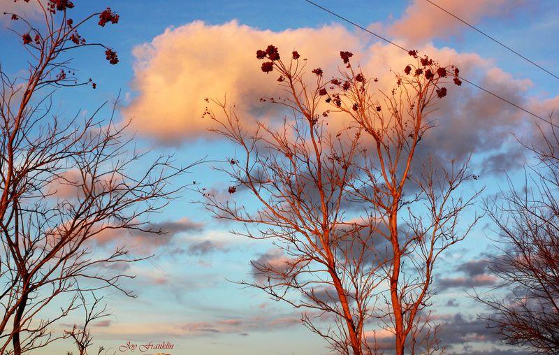 January 2009 Clouds
