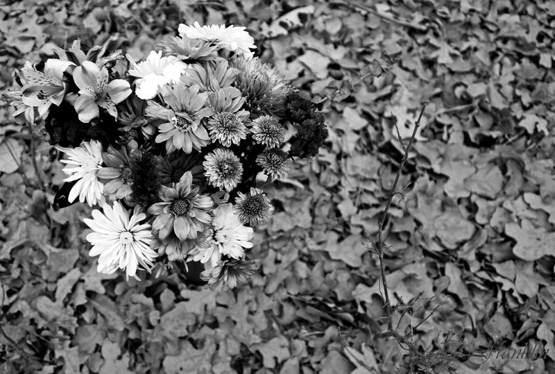Flowers and Leaves BW