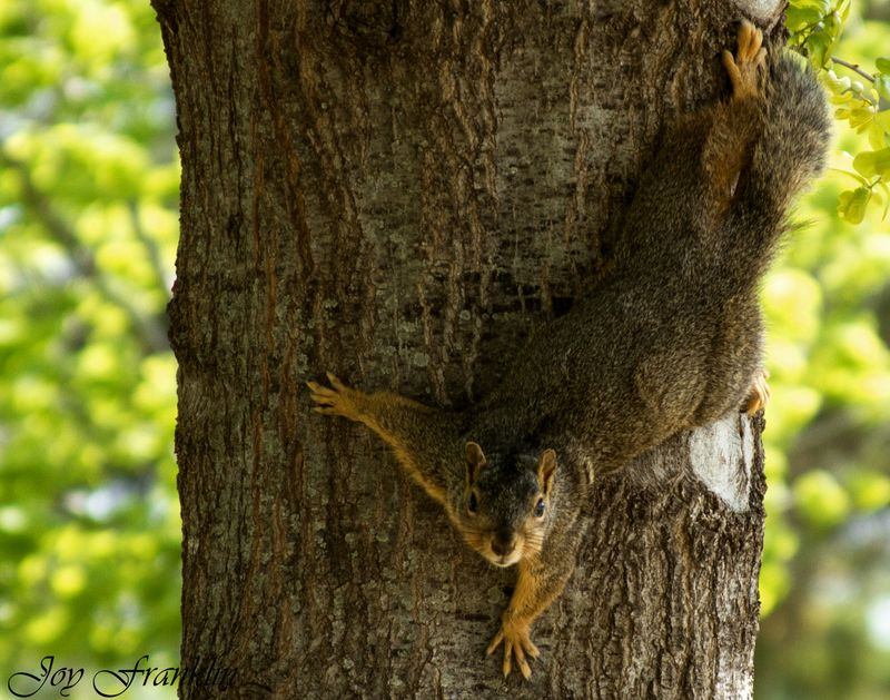 You Can't See Me Squirrel