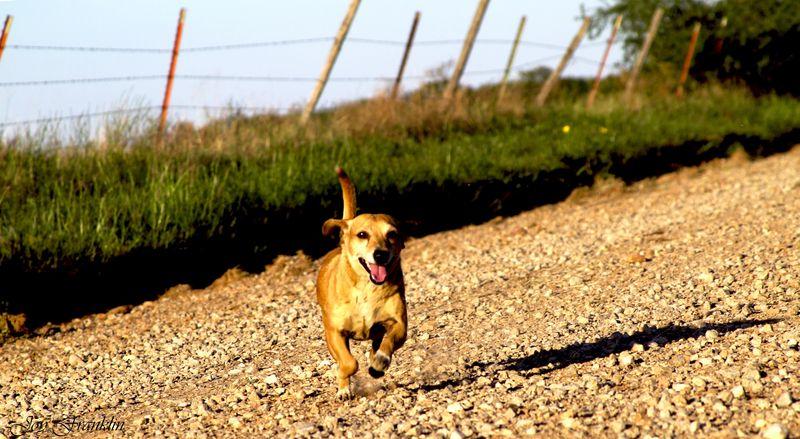 Ozzie Doggy Running