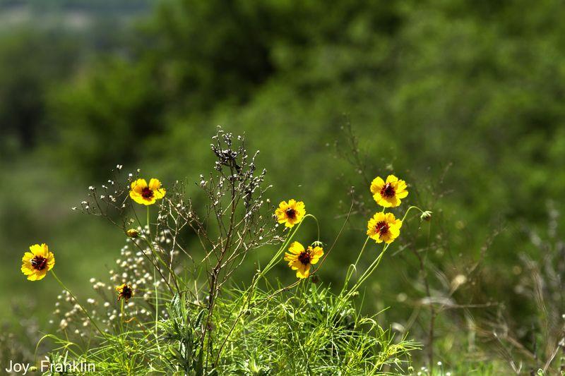 Flowers near Cruce