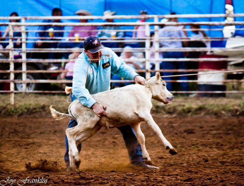 Calf Roping 3 (1 of 1)