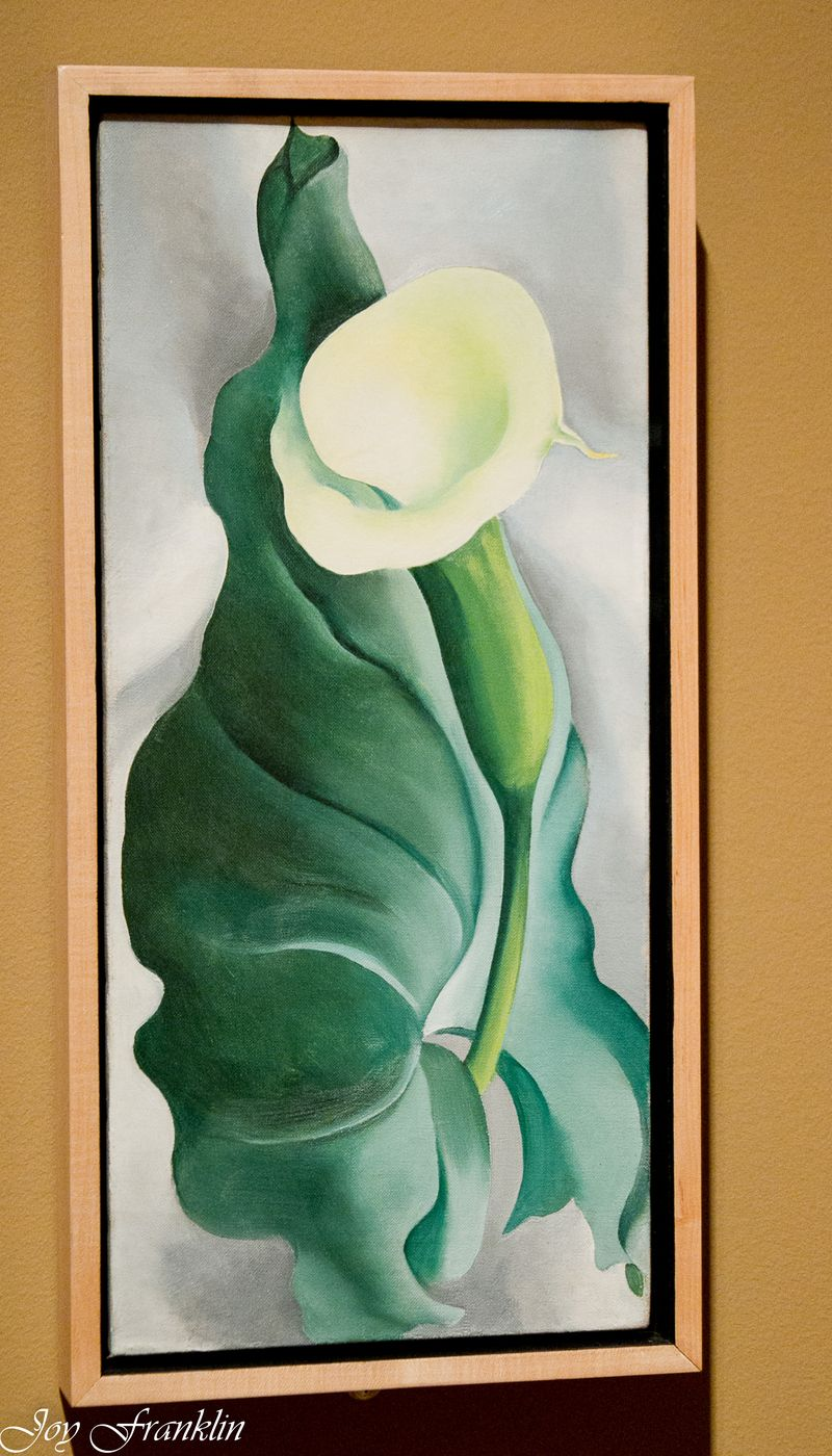 Georgia O'Keefe Calla Lily at OKCMOA-031