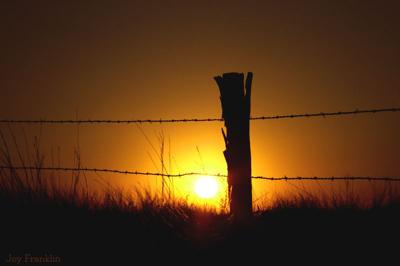 Setting Sun and Barbed wire fence