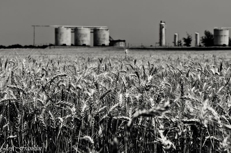 Oklahoma Wheat in BW (1 of 1)