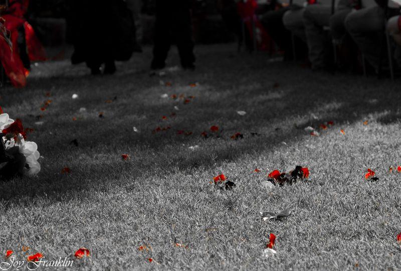 Rose Petals (1 of 1)
