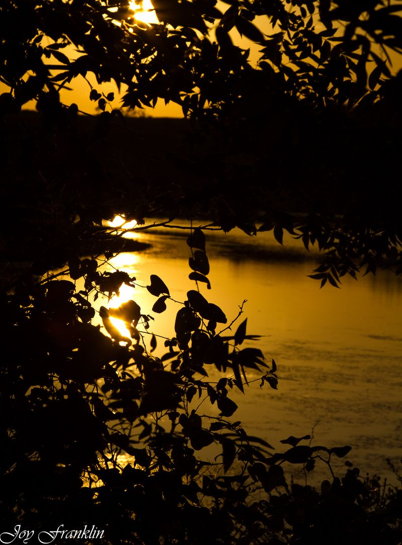 Leaves Pond Sunset (1 of 1)