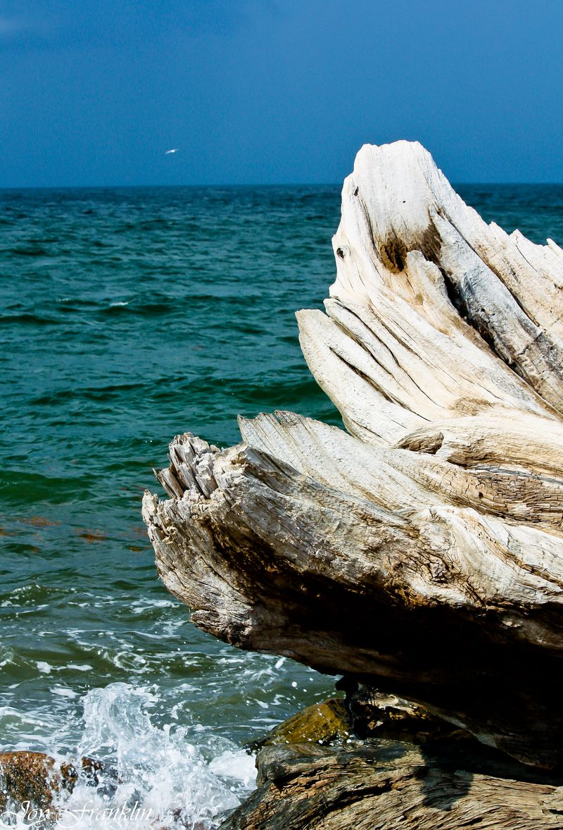 Beautiful Driftwood (1 of 1)