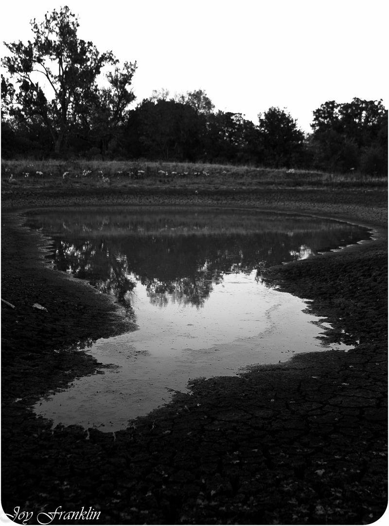 Dark pond 2 (1 of 1)