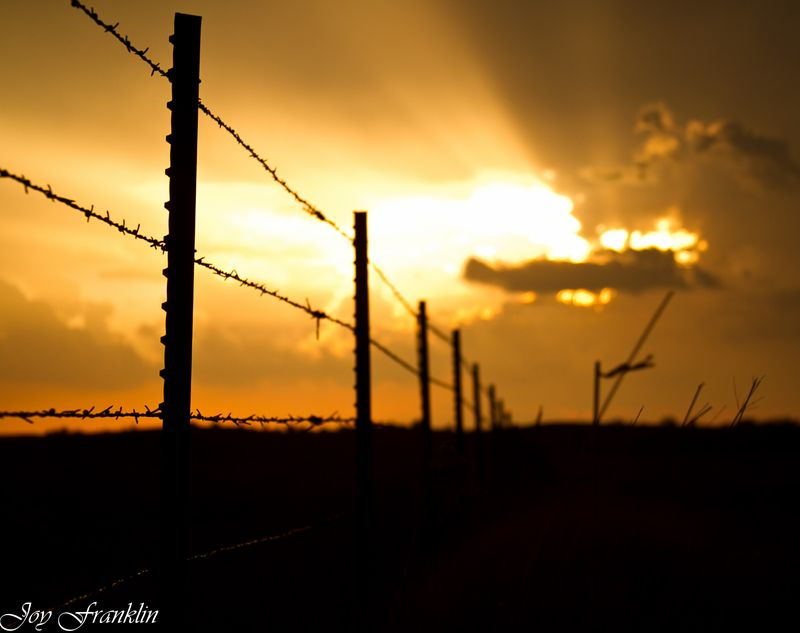 Sunset Barbed Wire Fence (1 of 1)