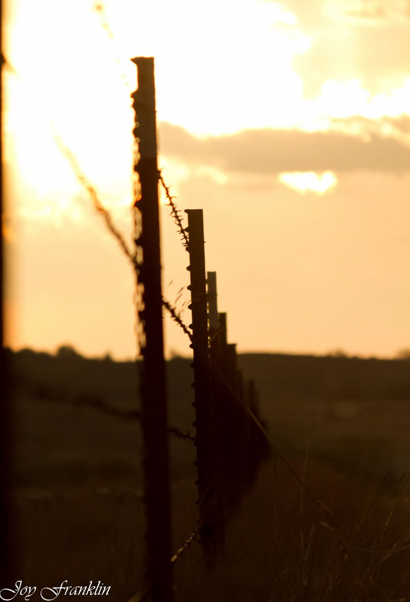 Grainy Barbed Wire (1 of 1)