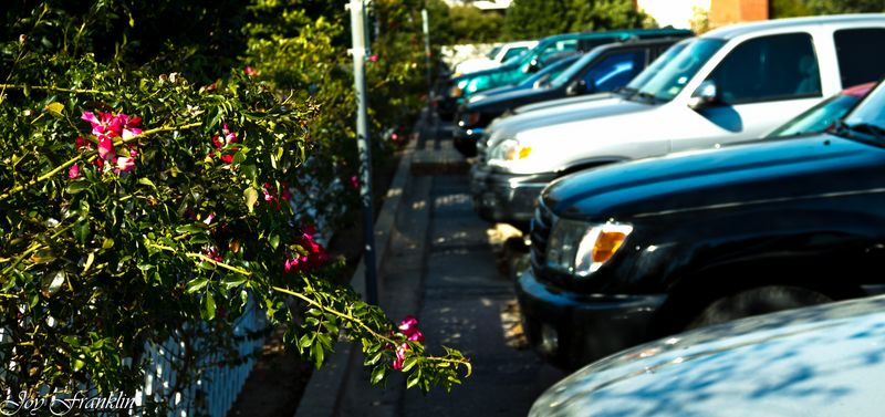 Flowers and parkinglot 2 (1 of 1)