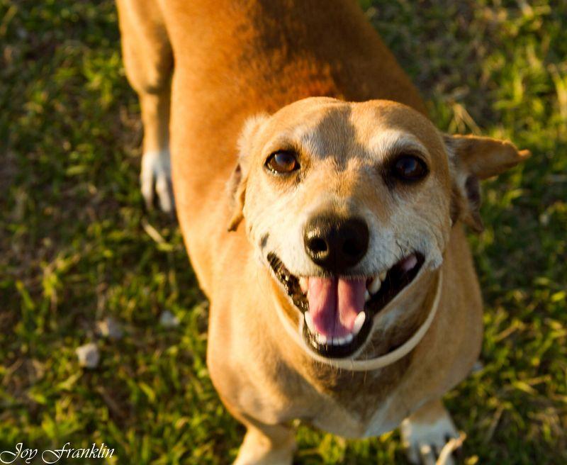 Doggie Smile (1 of 1)