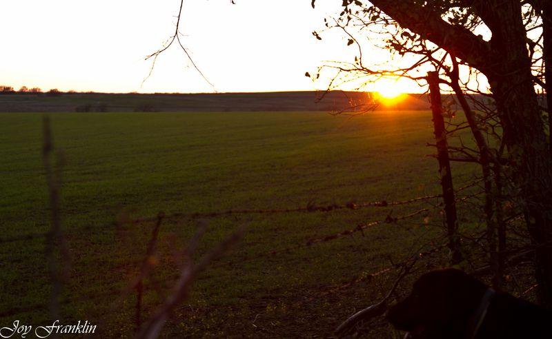 Green Fields-098