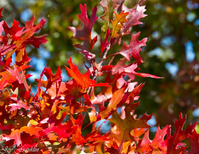 Green and Red Leaves -035