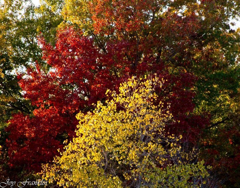 Fall Foilage -193