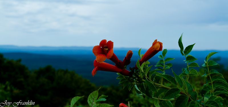 Flower on the Mountain (1 of 1)