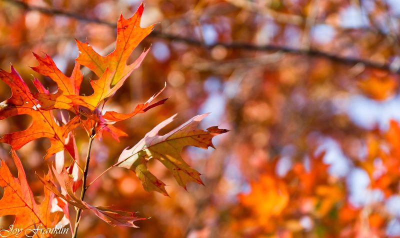 Leaves -179