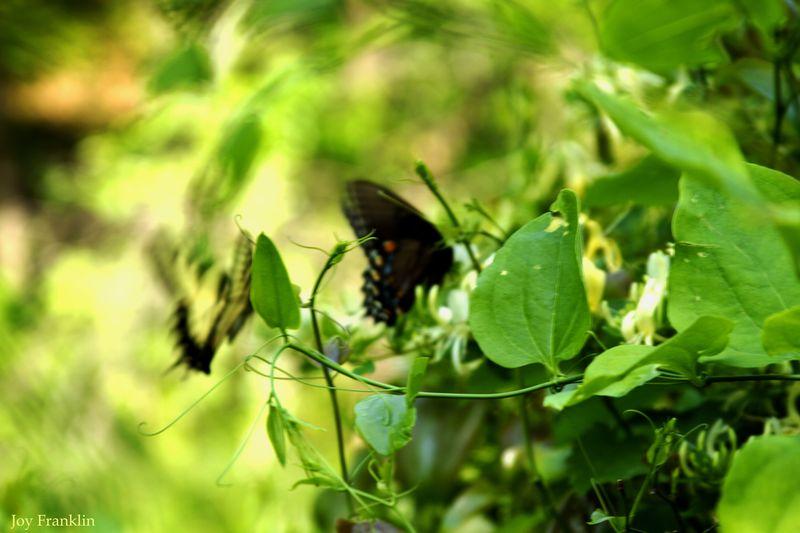 Beautiful Blurry Butterflies