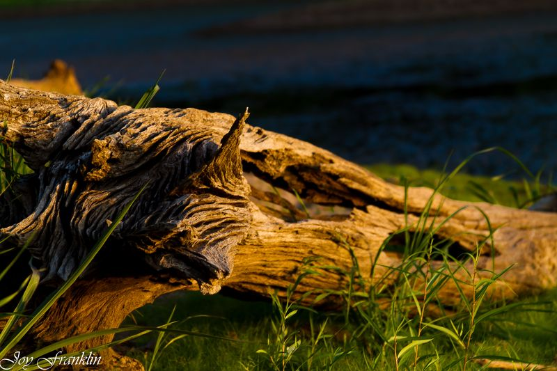 Dead Log by pond (1 of 1)
