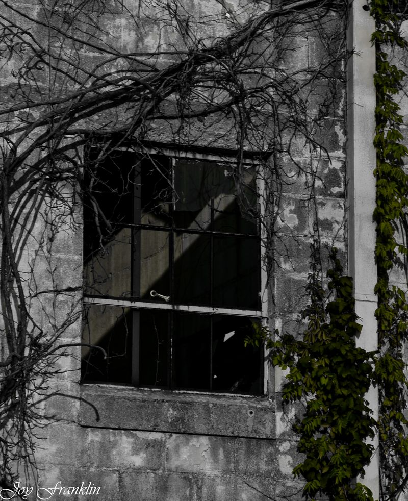 Abandoned window and vines-234