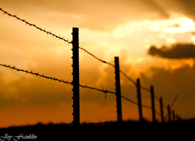 Barbed wrie sunset (1 of 1)