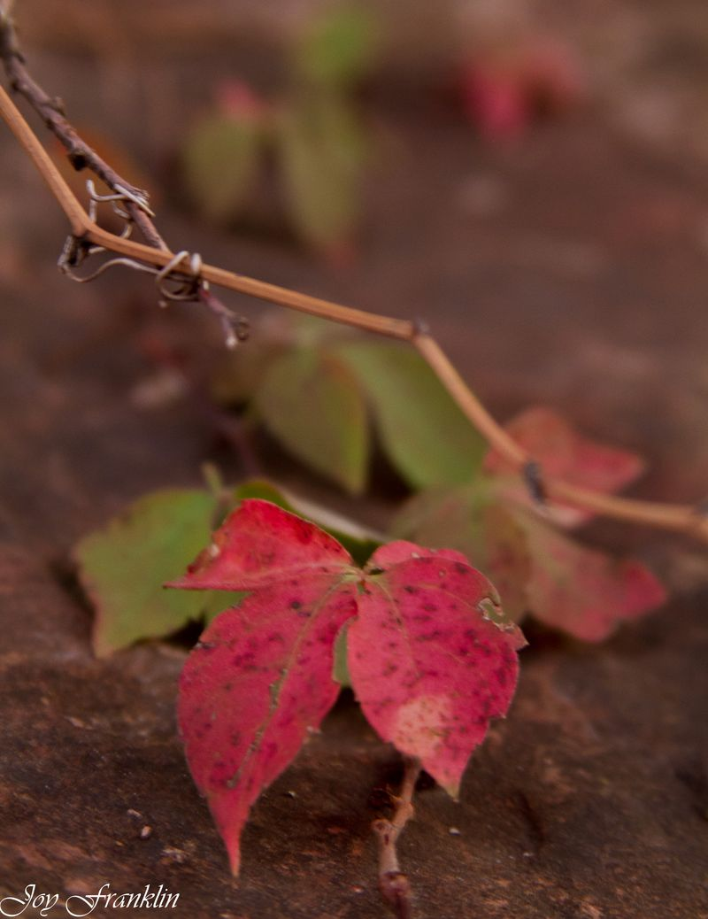 Leaves on a rock-126
