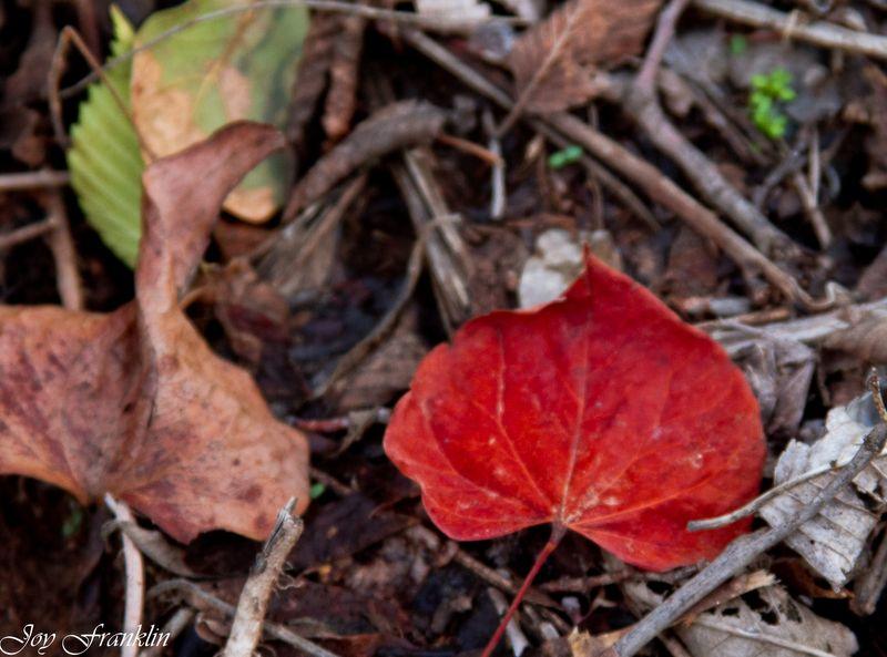 Leaves-112