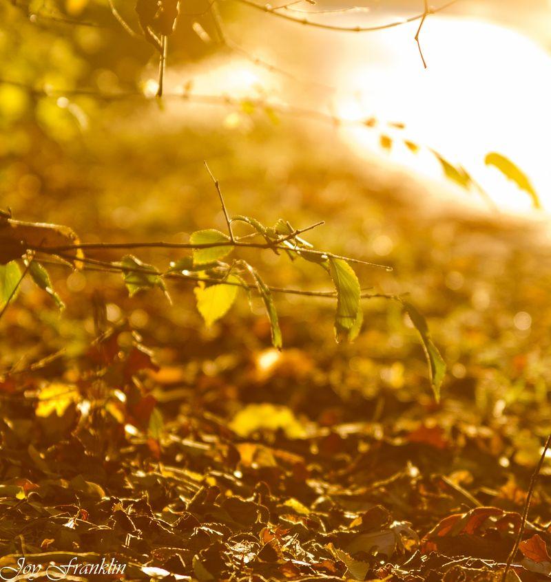 Autumn Leaves -165