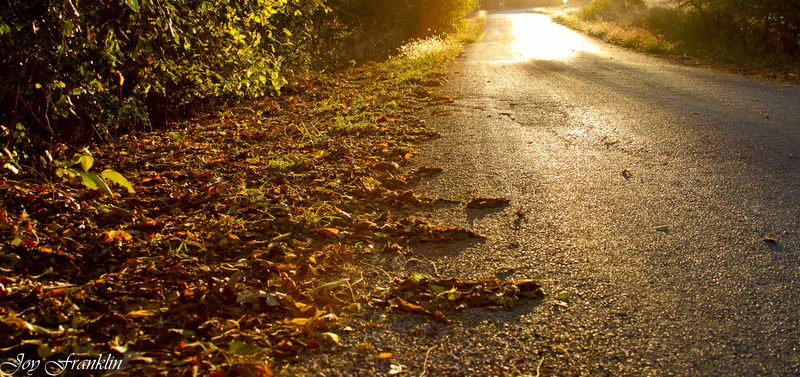 Autumn Leaves in the Road -156