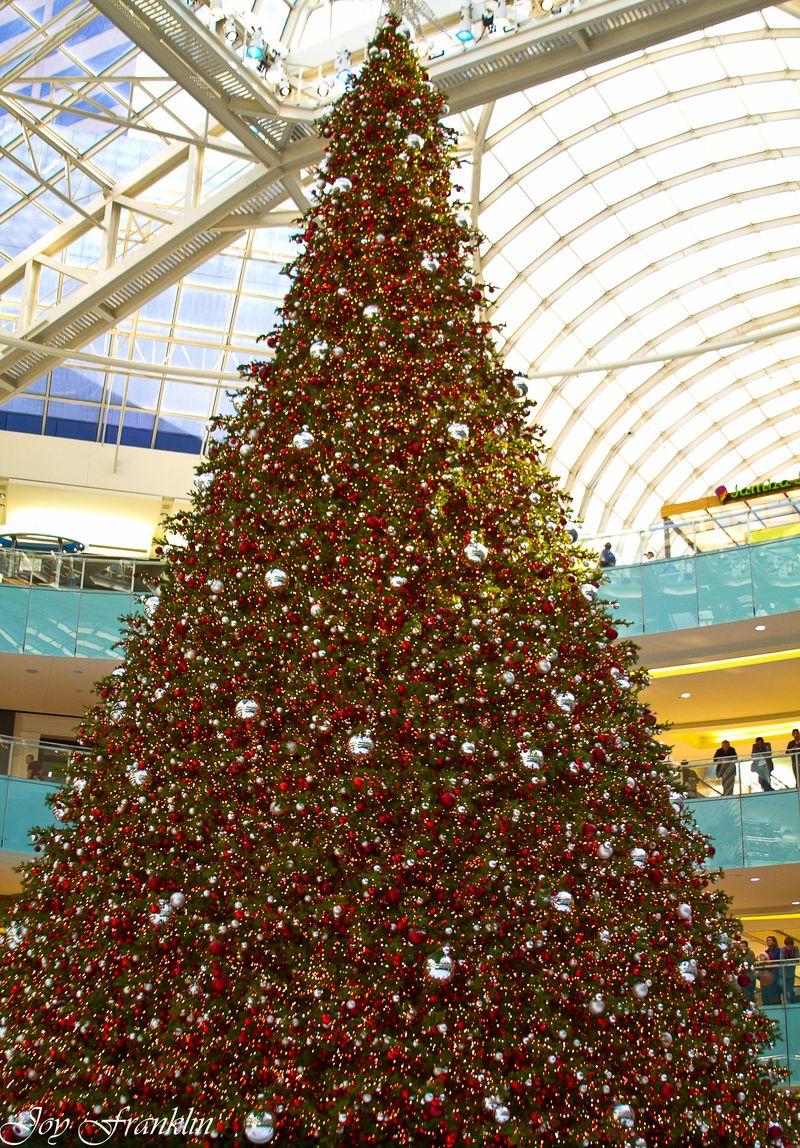 Galleria Tree-1