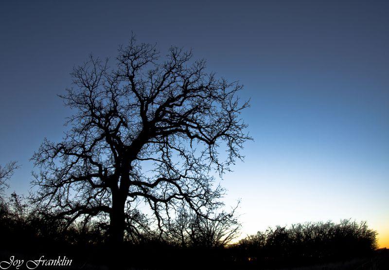 Fisheye tree-1