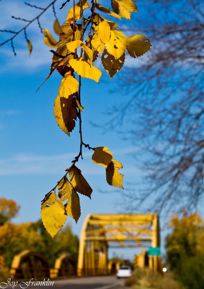 November Leaves at Erin Springs-061