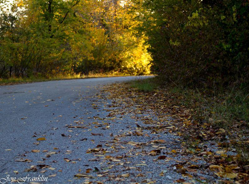 Autumn leaves near Lake Fuqua-122