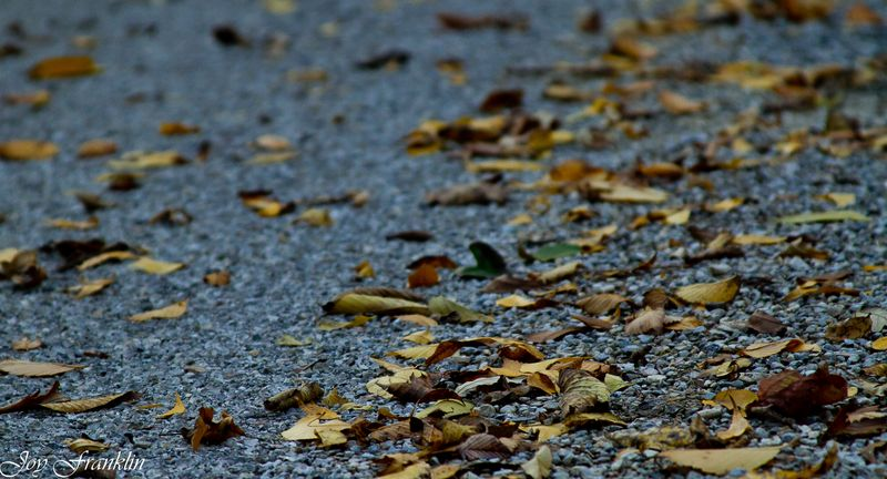 Leaves on the Blacktop-123