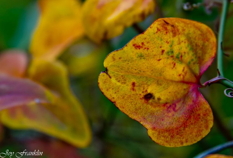 Beautiful Autumn Leaves-048