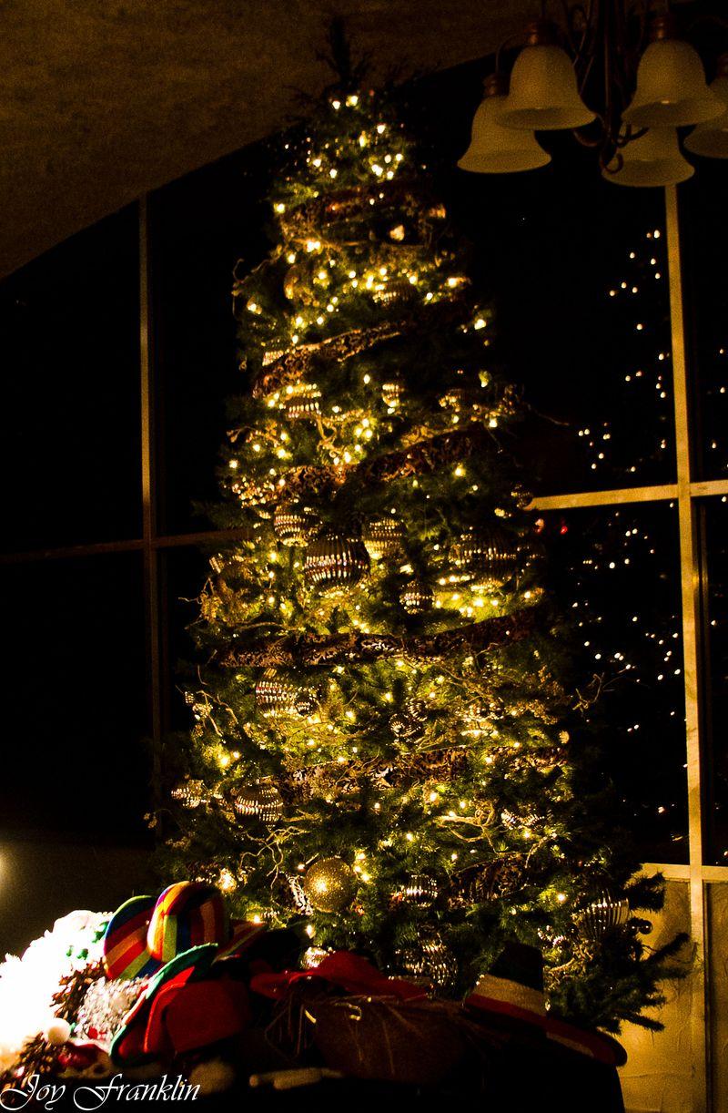 OH Christmas tree (1 of 1)